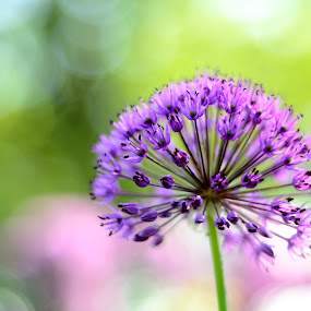 Bright Star by Anupam Pal - Nature Up Close Flowers - 2011-2013