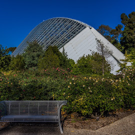 Adelaide Botanical Gardens by Sean Heatley - City,  Street & Park  City Parks ( bicentennial conservatory, south australia, flowers & plants, blue sky, peaceful, nature, park, greenhouse, path, adelaide, historical, public, garden, city )