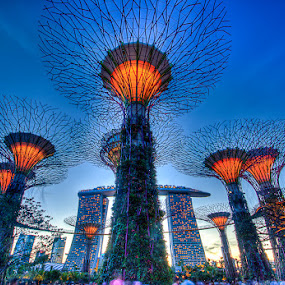 Super Tree Grove by Glice Galac - Buildings & Architecture Other Exteriors