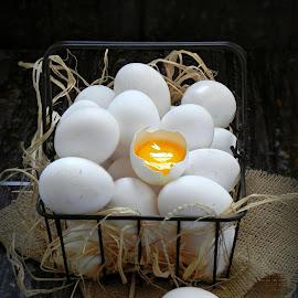 fresh eggs by Fidaa Haddad - Food & Drink Ingredients ( hail, eggs, fresh, still life, food )