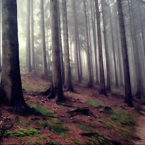 Miedzygorze by Marta Bednarska - Landscapes Forests ( forest fog )