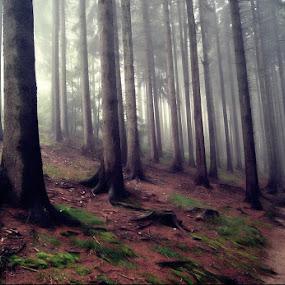 Miedzygorze by Marta Bednarska - Landscapes Forests ( forest fog )