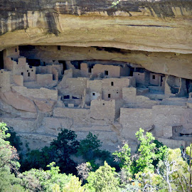 Mesa Verde Indian Dwellings by Michael Villecco - Landscapes Caves & Formations ( mesa verde, dwelling, caves, colorado, indian )