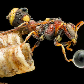 Let It Go! by Carrot Lim - Animals Insects & Spiders