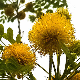 by Terry Oviatt - Nature Up Close Other plants