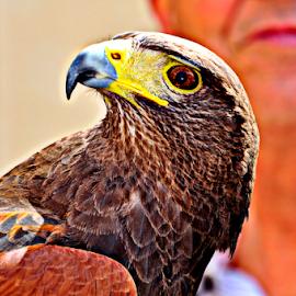 by Twanny Chicharito Falzon - Animals Birds (  )