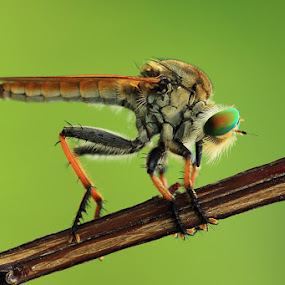 Stayed by Said  Ikhsan - Animals Other ( indonesian, animals, macro, nature, micro )