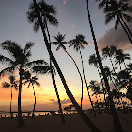 Sunset in paradise by Louise Rumian - Novices Only Landscapes ( peaceful, sunset, hawaii, palms )