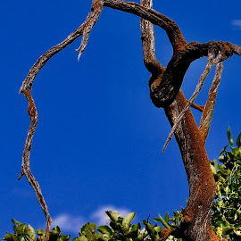 Blue skies by Lyn Simuns - Nature Up Close Trees & Bushes ( mountain, tree )