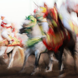 The Show by Badr Pedro - People Group/Corporate ( horse, morocco, people )