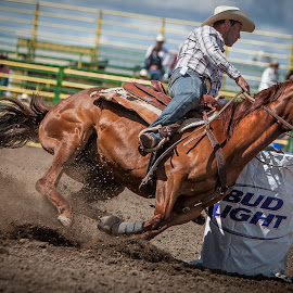 Dig In by George Petropoulos - Sports & Fitness Rodeo/Bull Riding ( #cowboy, #horse, #control, #muscle, #rodeo )