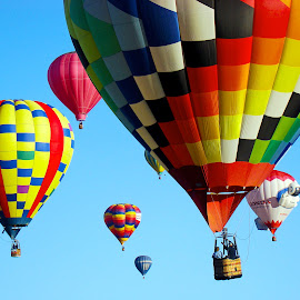 Just A Few! by Dee Haun - Transportation Other ( hot air, balloon fiesta, albuaquerque, 2007, 0682e4, several, transportation, hot air balloons, bolloons, multicolored )