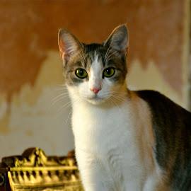 Lolota* by Serge Ostrogradsky - Animals - Cats Portraits