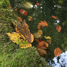 Autumn colors by Ovidiu Gruescu - Nature Up Close Leaves & Grasses