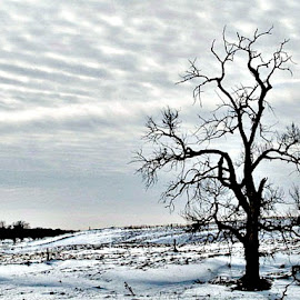 The Lone Tree by Dawn Price - Landscapes Prairies, Meadows & Fields (  )