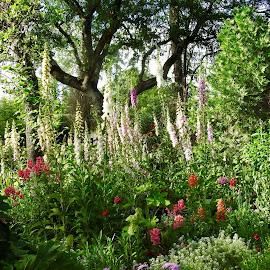 Foxy flowers by Sherry Gardner - Landscapes Prairies, Meadows & Fields
