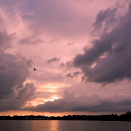 Clouds & Bird at Sunset by Kathy Rose Willis - Landscapes Cloud Formations ( clouds, water, peaceful, purple, sunset, cloudscape, yellow, gray )
