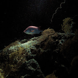 fish in cave by AB Rossouw - Nature Up Close Water ( fish, scuba, dive, cave, rocks )