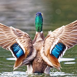 Bird 482_DxO-1 Q.jpg
