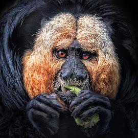 by Dennis Bartsch - Animals Other Mammals