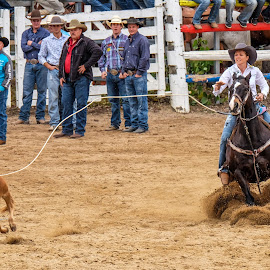 Rodeo Roping action by Brent McKee - Animals Horses ( mareeba rodeo, roping, horse, roping action, rodeo, breakaway roping )