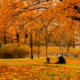 Fall in the Park by Darren Sutherland - City,  Street & Park  City Parks ( 2017, trip, new york, new york trips )