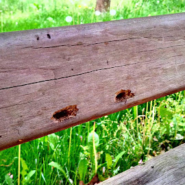 Home sweet Home (carpenter bee holes in a bench) by Cecilia Sterling - Buildings & Architecture Other Exteriors