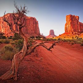 Monument Valley by Eugene Dopheide - Landscapes Deserts ( desert, red, tree, distorted tree, landscape )