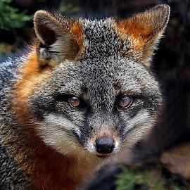 by John Larson - Animals Other Mammals