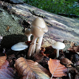 Mushroom in the wood by Tom L - Instagram & Mobile Android ( #photo #android #mushroom #wood )