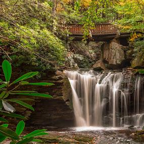 Elakala Falls by Jason Lemley - Landscapes Waterscapes ( waterfalls, rhododendron, waterscape, bridge, rocks )