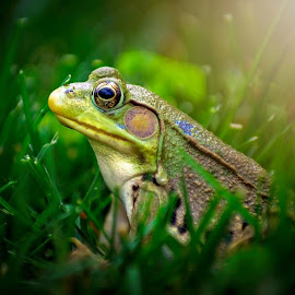 Prince Charming  by Steve Jones - Animals Amphibians