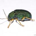 Emerald Leaf Beetle