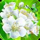 Flower Crush Match 3