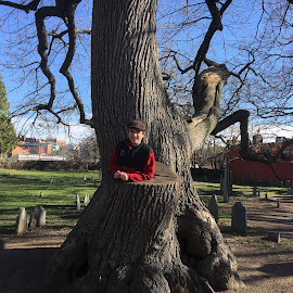 Boy in Huge Tree in Cemetary by Kristine Nicholas - Novices Only Landscapes ( teen, graves, green, plants, grave, historic, kid, graveyard, child, nature, tree, blue, trees, boy,  )