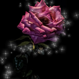 The magical Rose by Tammy Arruda - Digital Art Things ( red, roses, flowers, flower )