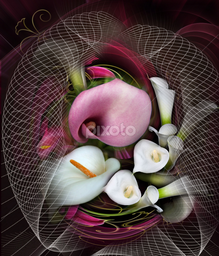 Soft by Carmen Velcic - Digital Art Abstract ( abstract, violet, calla lilly, flowers, digital, curves )
