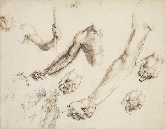 In this probing enquiry into the position of the hand of Adam for his famous engraving <b>'Adam and Eve'</b> of 1504, <b>Albrecht Dürer</b> even picks up the veins on the arm of his model.