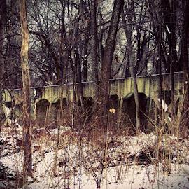 Abandoned Train Bridge by Marty Stepalavich - Transportation Trains