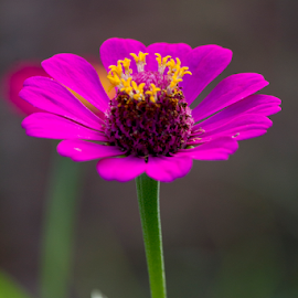 by Asher Jr Salvan - Flowers Flowers in the Wild