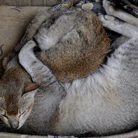 by Aloke Paul - Animals - Cats Kittens (  )