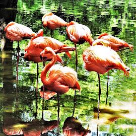 by Rhonda Rossi - Animals Birds