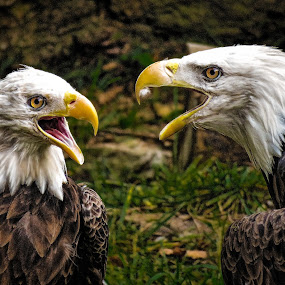 by Ron Meyers - Animals Birds
