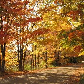 Sun Through Autumn Leaves by Diane Butler - City,  Street & Park  Street Scenes ( autumn, fall, trees, road, leaves, dirt, pwcfallleaves-dq )