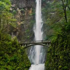 Multnomah Falls by Bud Walley - Landscapes Waterscapes ( oregon, columbia, gorge, falls, bridge, multnomah, river )