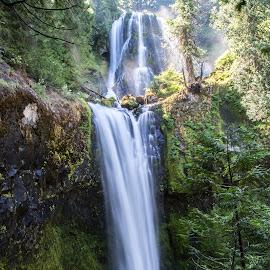 Falls Creek Falls by Mats Nordgren - Landscapes Waterscapes ( water, green, waterfall, moss, falls creek falls, sunshine )