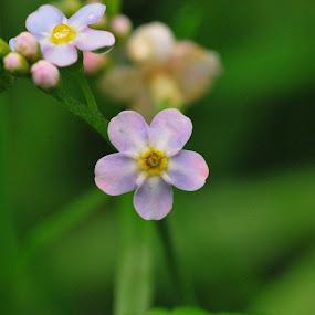 by Jade Bracke - Flowers Flowers in the Wild (  )