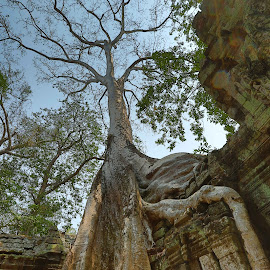 Nature reclaiming Cambodian Temple by Brent Hendricks - Buildings & Architecture Statues & Monuments ( thom prohm, cambodia )