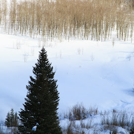 Colorado by Gannon McGhee - Landscapes Weather ( winter, tree, snow, colorado, river )