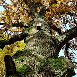 by Eugenija Seinauskiene - Nature Up Close Trees & Bushes